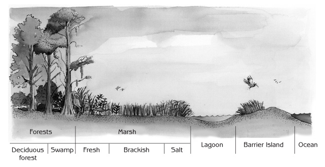 Natural Ecosystem Drawing of Natural Ecosystems in